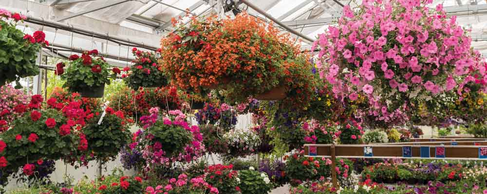 hanging baskets for sale in Retford, Notts
