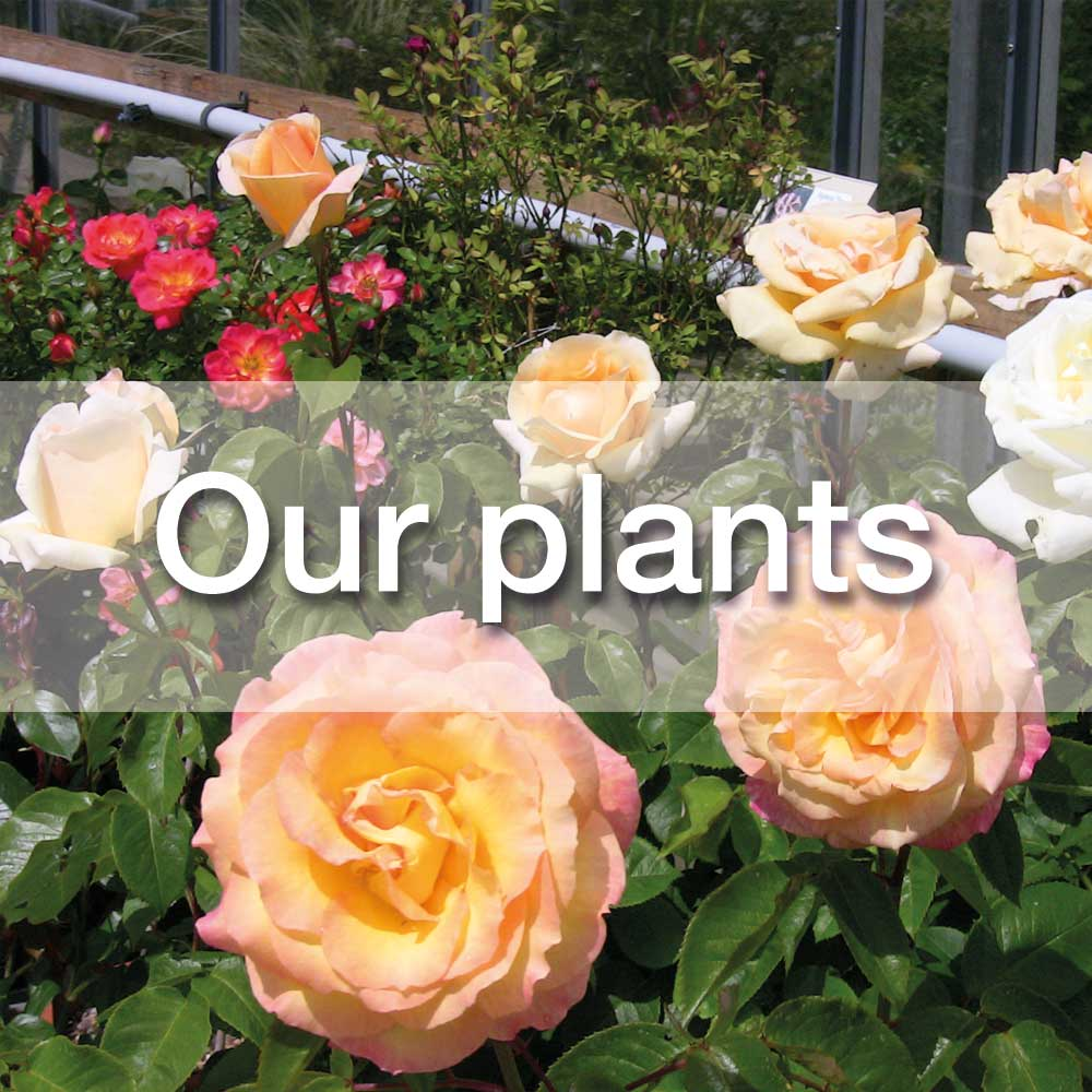 Our plants at Windmill View plant Centre, retford